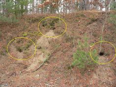 what does it look like inside a bobcat den | Multiple Den Sites in One Hill