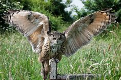 Eagle Owl by Steve {e_cathedra}...view large!