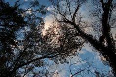 Trees against the Sky by HaleyGottardo