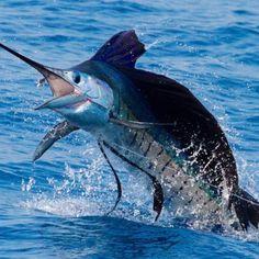 Fishing Girls, Sport Fishing, Fly Fishing, Giant Fish, Big Fish, Marlin Fishing, Offshore Fishing, Deep Sea Fishing, Saltwater Fishing