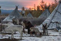 【AFP記者コラム】モンゴルのトナカイ遊牧民を訪ねて
