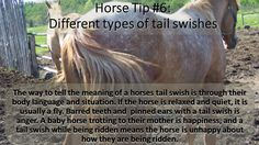 Horse tip Tuesday  #equihealthcanada #horse #firstaid #horses #ehc