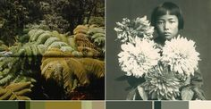 Camouflage Color Inspiration