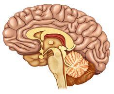 Prevención para evitar el deterioro cognitivo   Sentirse bien es facilisimo.com