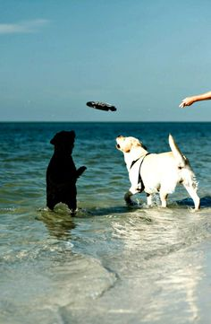 With the area's only dog beach, Fort De Soto Park, near St. Pete Beach, gives pets and their families a chance to enjoy the water together. Photo courtesy of Visit St. Pete/Clearwater