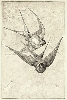 Victorian Bird Illustration.