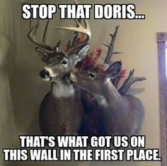 Would it be wrong for them to use the Deer Antler Wine Cork to keep their opened bottle fresh? Is that just bad Deer Etiquette? Funny Hunting Pics, Hunting Jokes, Hunting Tips, Bow Hunting, Hunting Stuff, Funny Deer, Deer Hunting Season, Deer Pictures, Oh Deer