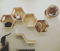 Kitty cat wall shelf system, possible DIY? Kitty cat wall shelf system, possible DIY? When storage doubles as decor, everything just feels right. Cat Wall Shelves, Cat Playground, Cat Room, Pet Furniture, Furniture Dolly, Furniture Movers, Diy Stuffed Animals, Catio, Crazy Cats