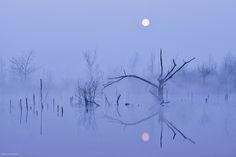 Moor Moon Bog fog reflections --- by Kilian Schönberger on 500px