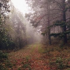 trails through the woods Beautiful World, Beautiful Places, Forest Path, Adventure Is Out There, Places Around The World, The Great Outdoors, Mists, Decir No, Natural Beauty