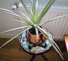 #DIY // Recycler un objet déco en pot de fleur