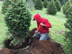 La navidad se hace amigable con el medio ambiente cuando rentas tu propio pino para adornar y no desperdiciar. 😄