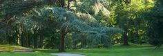 Image result for ny botanical garden conifere section