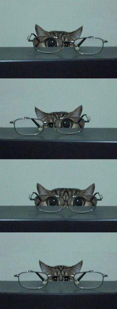 Bonjour bonjour les coquelicots,    Êtes-vous prêts à rire ? Oui, rire !        Enfilez sur vos épaules votre plus beau sac à dos, et en route pour l'aventure du rire !        N'oubliez pas les lunettes de protection.        Avant toute chose,