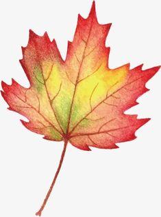 Botanical Art, Botanical Illustration, Watercolor Illustration, Watercolor Paintings, Watercolours, Autumn Nature, Autumn Art, Autumn Leaves, Fruit Painting