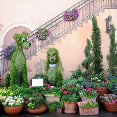Disney Topiaries | Lady and the Tramp