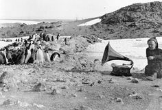 Penguins listening to a gramophone during Ernest Shackleton's expedition to Antarctica. (1907)