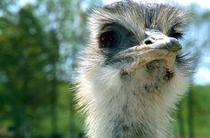 Ostrich face!!!