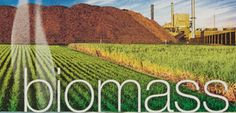 Find out more about biomass boilers and biomass in www. Biomass Boiler, Vineyard, Green, Plants, Apollo, Outdoor, Outdoors, Vine Yard, Vineyard Vines
