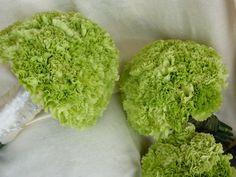 Green Carnation Wedding Flowers | Wedding Flowers