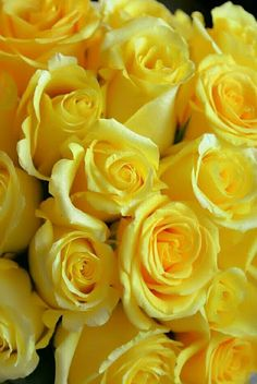 Beautiful Rose Flowers, Love Rose, Love Flowers, Vintage Flowers, Rose Flower Wallpaper, Flower Backgrounds, Yellow Aesthetic Pastel, Pretty Wallpapers, Mellow Yellow