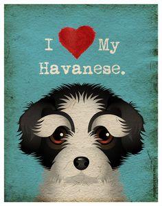 I Love My Havanese I Heart My Havanese I by DogsIncorporated