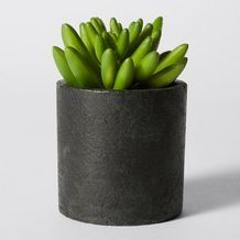 Search results for plant on Target Site Small Succulents, Succulent Pots, Planter Pots, Target Room Decor, Window Plants, The Hamptons, Create, Australia, Cacti