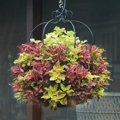 Create creative hanging flower arrangements with Pamela Crawford hanging baskets. These hanging flower baskets add beauty to any garden. Hanging Flower Arrangements, Hanging Flower Baskets, Basket Planters, Outdoor Planters, Flower Planters, Hanging Planters, Outdoor Gardens, Metal Planters, Flowers Garden