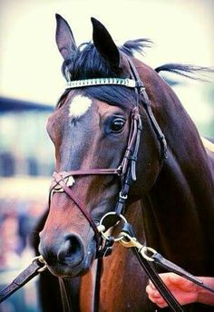 The Beautiful Royal Delta...R.I.P. Sweet One.