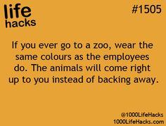 If you ever go to a zoo, wear the same colours as the employees do. The animals will come right up to you instead of backing away.