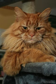 Cool Cat Attitude
