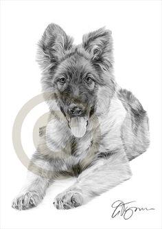 Dog German Shepherd Puppy pencil drawing print - A4 size - artwork signed by artist Gary Tymon - Ltd Ed 50 prints only - pencil portrait by GaryTymonArtwork on Etsy https://www.etsy.com/listing/204546206/dog-german-shepherd-puppy-pencil-drawing
