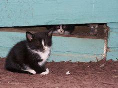 Kittens | Flickr - Photo Sharing!