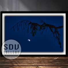 Downloadable image, digital photo, printable wall art, tree, forest, moon, blue sky, water, night, spring, moonlight, Vienna, Austria Moon Photography, Tree Forest, Photo Tree, Vienna Austria, Landscape Photos, Nature Photos, Printable Wall Art, Moonlight, Digital Art