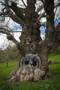 This tree is awesome. Someone carved the tree and owls live here. Owl Tree, Tree Art, Weird Trees, Tree Faces, Tree Carving, Unique Trees, Nature Tree, Amazing Nature, Amazing Art