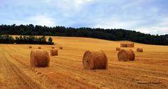 Les bales de palla formen part del paisatge estiuenc de la Segarra