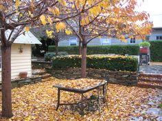 Autumn leaves in Tasma Gardens, Daylesford, Victoria, Australia. www.TasmaHouse.com