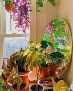 "House of Plant Lovers (HoPL) 🌿 on Instagram: ""Dreamy corner ✨ //📸 @briellemariesandra"""