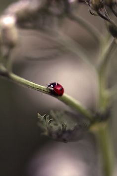 The lovely Lady Bug She's A Lady, Our Lady, Lady In Red, Pretty Pictures, Cool Photos, God Is Amazing, All Gods Creatures, Macro Photography, Photography Backgrounds