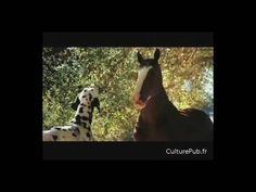 Clydesdale Budweiser Commercial - Rocky Theme (favorite commercial ever, has two of my favorite things, HORSES and Datamations)