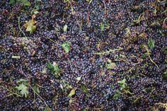 Wine in Israel