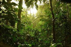 Image result for brunei rainforest