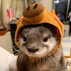 Things that make you go AWW! Like puppies, bunnies, babies, and so on. Otters Cute, Cute Ferrets, Baby Otters, Baby Sloth, Cute Little Animals, Cute Funny Animals, Fluffy Animals, Animals And Pets, Wild Animals