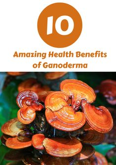 Never heard of Ganoderma? It's time you learned these 10 fantastic health benefits of this little-known Chinese herb. http://www.nutritiontrend.com/benefits-of-ganoderma/