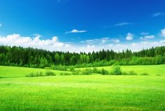 緑の草原と青い空の壁紙 | 壁紙キングダム PC・デスクトップ版
