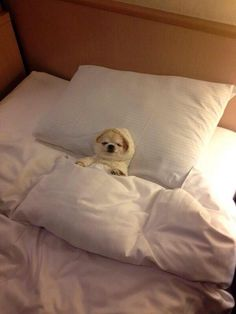 How I am sleeping tonight.