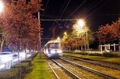 Ставропольская в цвету