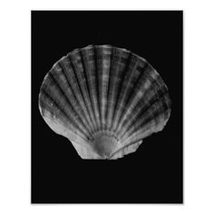 Fan Shell Photographic Print Black and white fine art print of a fan shell. This design is available on 2 products, for more options visit my shop.