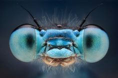 "Bug-obsessed Slovakian student, Dusan Beno captures detailed macro portraits of insects and spiders. He catches his subjects in the great outdoors and then ""bug-naps"" them by taking them back to his home for photo-shoots."