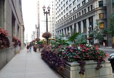 Unique by Design Landscaping & Containers Planters, Planter Ideas, Pretty Pictures, Sidewalk, Landscape, Type 1, World, Chicago, Commercial